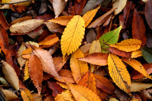 educazioneglobale autumn