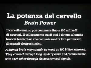 educazioneglobale Brain Power