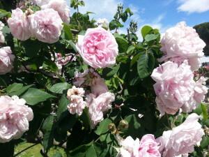 educazioneglobale roses 10